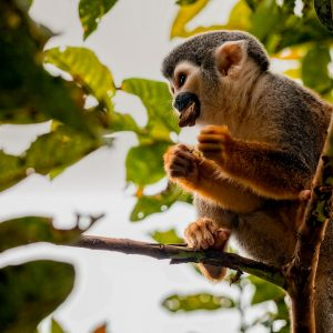 Cuyabeno Canoe Tour Monkey - Dracaena Lodge